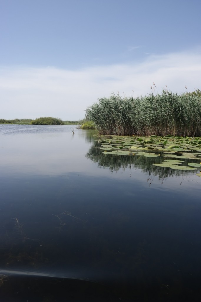 Rezervatia de nuferi, Delta Dunarii