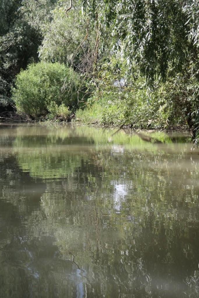 Vegetatie, Delta Dunarii