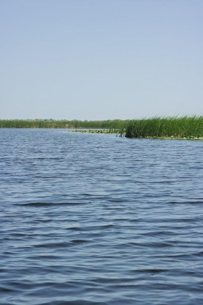 Stuf, Delta Dunarii